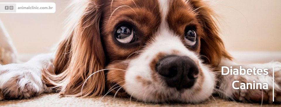 Diabetes-Canina.jpg